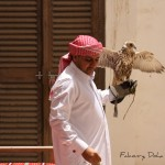 Traditional falconry in Qatar