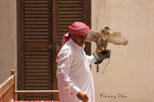 Falconry in Qatar