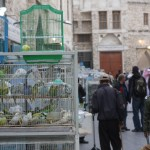 Pet shops in the souq