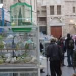 Pet shops in the souq
